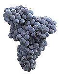 www.vinoribeiro.com